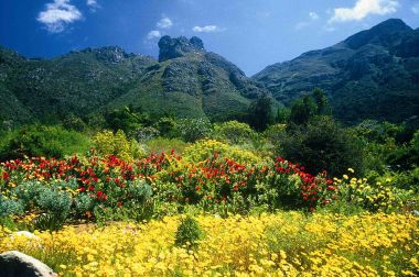 Kirstenbosch National Botanical Garden Cape Town How South Africa